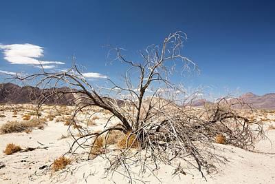 A Dead Bush In The Mojave Desert Art Print