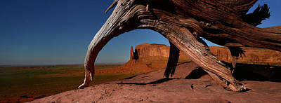 Mesquite Tree Photograph - A Dead Mesquite Trees And Buttes by Raul Touzon