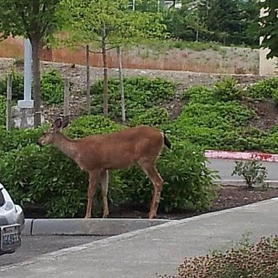 Wall Art - Photograph - A Deer Having A Snack Outside The by Monika Salita