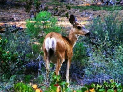 Photograph - A Deer Heart by Bobbee Rickard