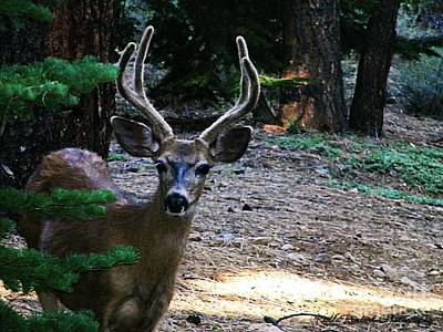 Photograph - A Deer Visitor by Bobbee Rickard