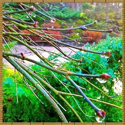 Raindrops Photograph - A Delicate Balance by Anna Porter