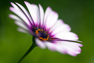 Conservatory Of Flowers Photograph - A Delicate Balance by Edward Kreis