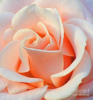 A Delicate Rose Art Print by Cindy Manero