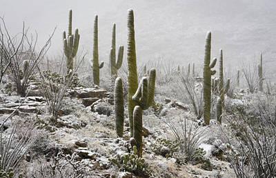 Photograph - A Desert Blizzard  by Saija  Lehtonen