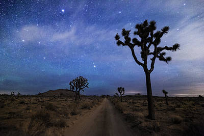 Photograph - A Desert Road And Joshua Trees At Night by Daniel J Barr