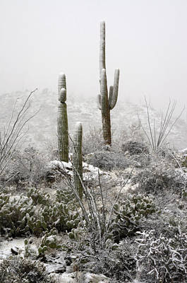 Photograph - A Desert Snow Day  by Saija  Lehtonen