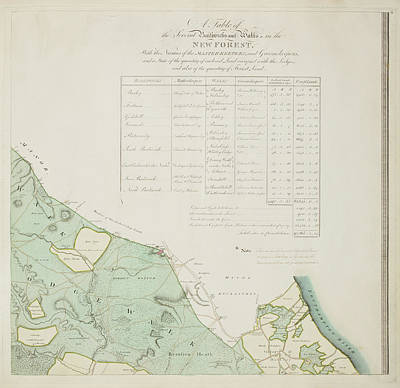 A Detailed Survey Map Of The New Forest Art Print by British Library