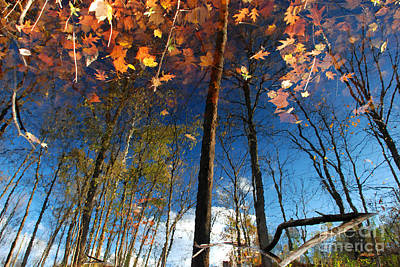 Photograph - A Different Side Of Autumn by Jason Kolenda