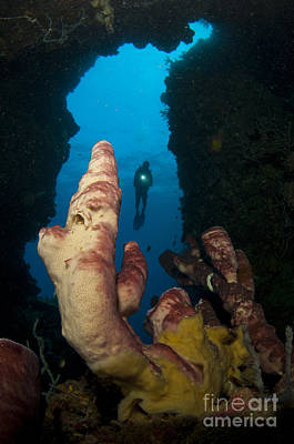 A Diver Looks Into A Cavern Art Print by Steve Jones