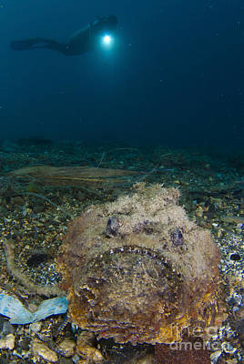 A Diver Looks On At A Giant Stonefish Art Print by Steve Jones