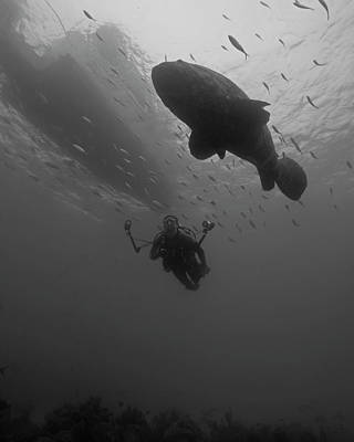 A Diver With A Goliath Grouper Art Print