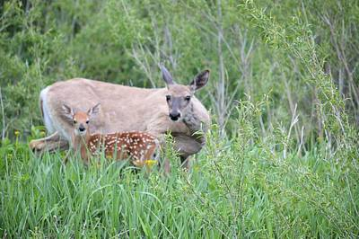 Photograph - A Doe And Her Fawn 2 by Bonfire Photography