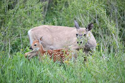 Photograph - A Doe And Her Fawn by Bonfire Photography