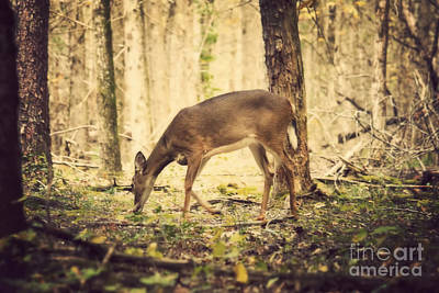 Photograph - A Doe In The Forest by Lena Auxier