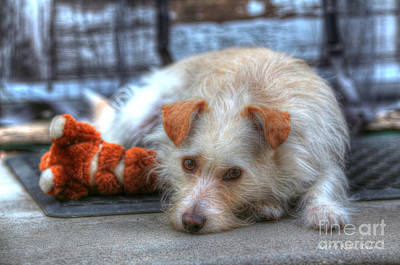 Photograph - A Dog And His Best Friend by Kevin Ashley