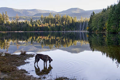 Rescued Greyhound Photograph - A Dog At The Lake by Peggy Collins