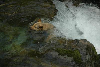 A Dog Saving By Itself  Original