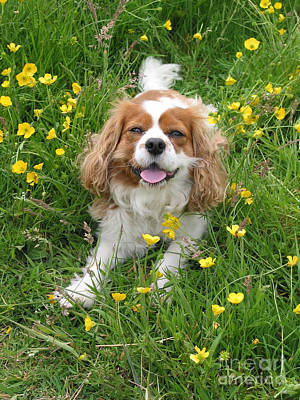 Photograph - A Dog's Buttercup Heaven by Jo Collins