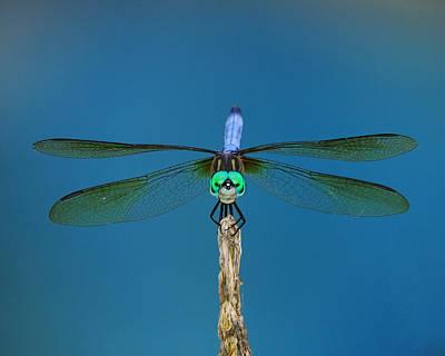 Photograph - A Dragonfly IIi by Raymond Salani III
