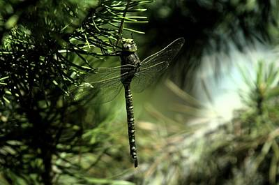 A Dragonfly In The Shade Art Print by Jeff Swan