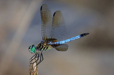 Photograph - A Dragonfly Iv by Raymond Salani III