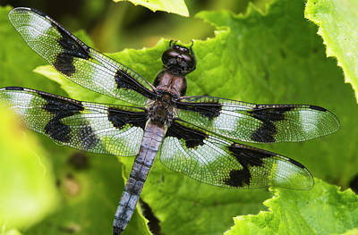 A Dragonfly Warms Up In A Vegetable Print by Robert L. Potts