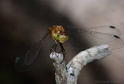 Photograph - A Dragon's Perch by WB Johnston