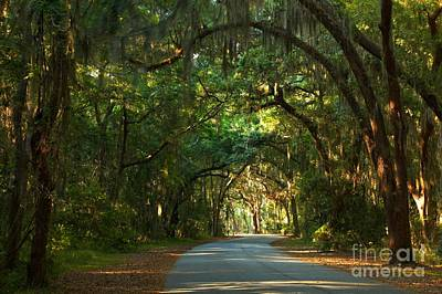 Photograph - A Drive Through The Oaks by Adam Jewell