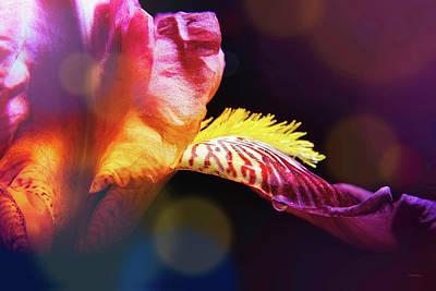 Photograph - A Drop On The Iris by Steven Llorca