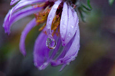 Photograph - A Droplet Of Rain by Eric Dewar