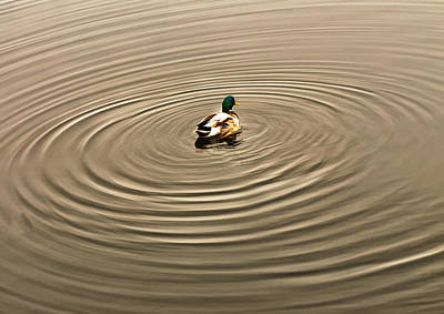 Photograph - A Duck Making Waves by Gary Slawsky