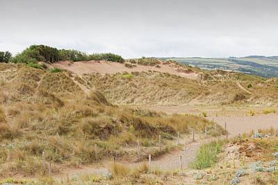 A Dune Restoration Project Art Print by Ashley Cooper