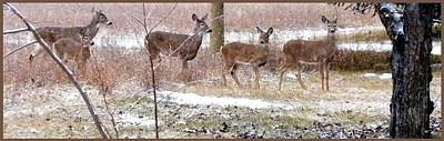 Photograph - A Dusting On The Deer by Will Borden