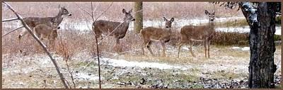 A Dusting On The Deer Art Print