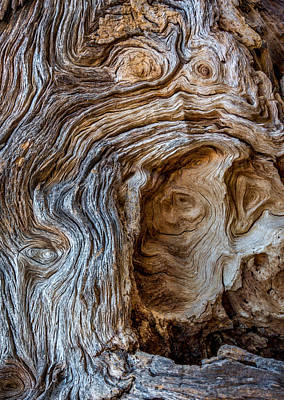 Art Print featuring the photograph A Face In The Wood by Beverly Parks