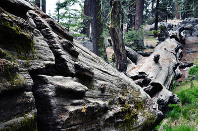 Art Print featuring the photograph A Fallen Giant Sequoia by Kyle Hanson