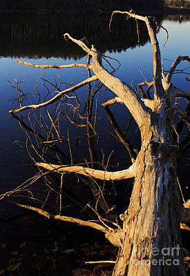 Photograph - A Fallen Tree Beside A Lake At Sunset by Edward Fielding