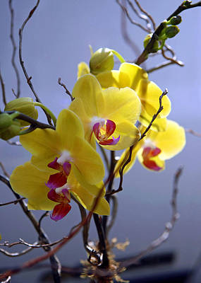 Photograph - A Family Of Orchids by Cora Wandel
