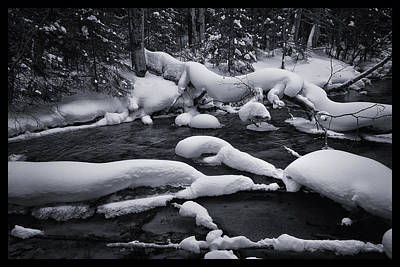 Photograph - A Family Of Snow Otters by Christopher Burnett