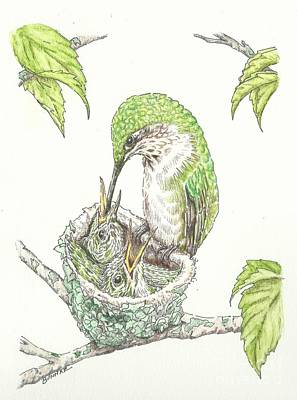 Hummingbird Drawing - A Family Tree by Sue Bonnar