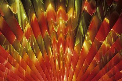 Photograph - A Fan Of Tulips by Doug Davidson