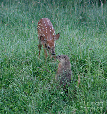 A Fawn And A Woodchuck Art Print