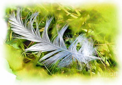 Photograph - A Feather . . . by Judi Bagwell