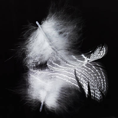 Photograph - A Feather And Its Reflection by Zoe Ferrie