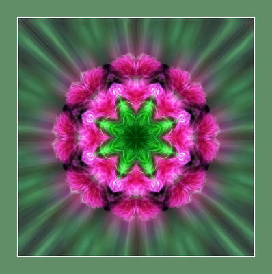 Raspberry Digital Art - A Featrhered Star by Linda Phelps