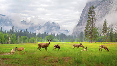 Yosemite National Park Photograph - A Feeling Of Ancient Time by Dianne Mao