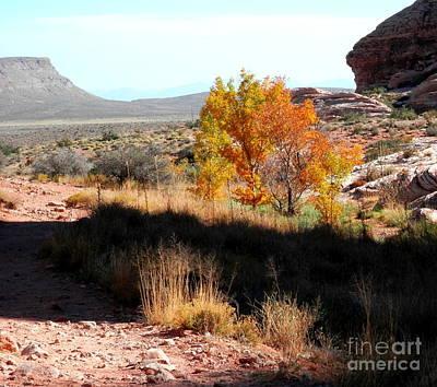 Photograph - A Few Autumn Trees by L Cecka