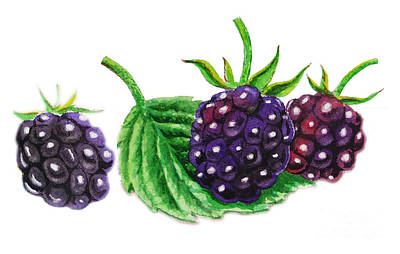 Just A Few Blackberries Art Print by Irina Sztukowski