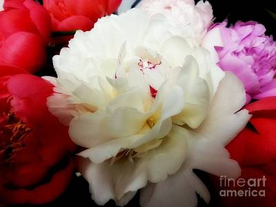 Photograph - A Few Peonies by Heather L Wright